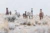 Wild Horses in Snowfall, Utah