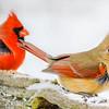 Cardinal Love #2