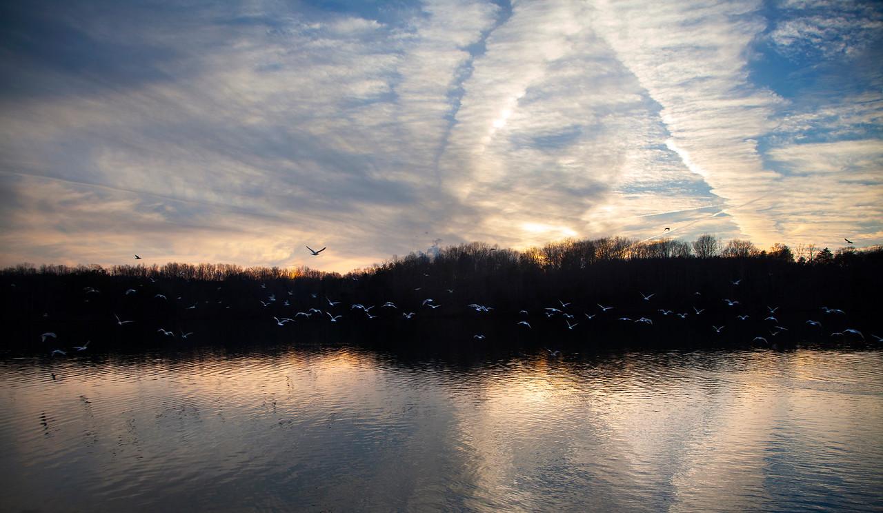 Belews Lake Seagulls