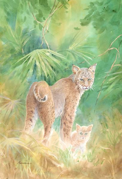 Florida Bobcats