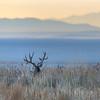 Mule Deer Sunrise