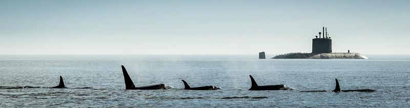 H.M.C.S. Chicoutmi's Orca Escort
