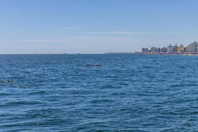Dolphins-034