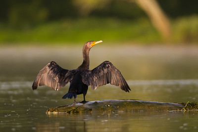 Cormorant Air Dry