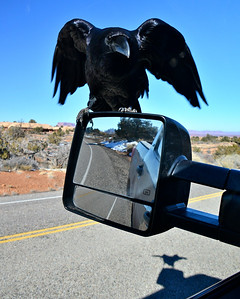 Raven  on a Rearview Mirror