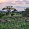 Zebras and elephant at sunset, Amboseli National Park, Kenya, East Africa
