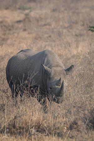 Kenya 2017