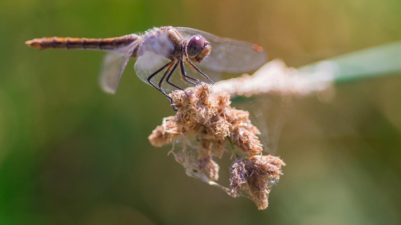 Dockside Dragonfly