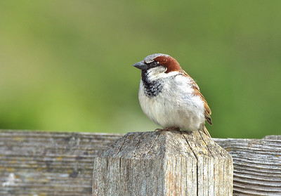 Bird Perched on Fencepost