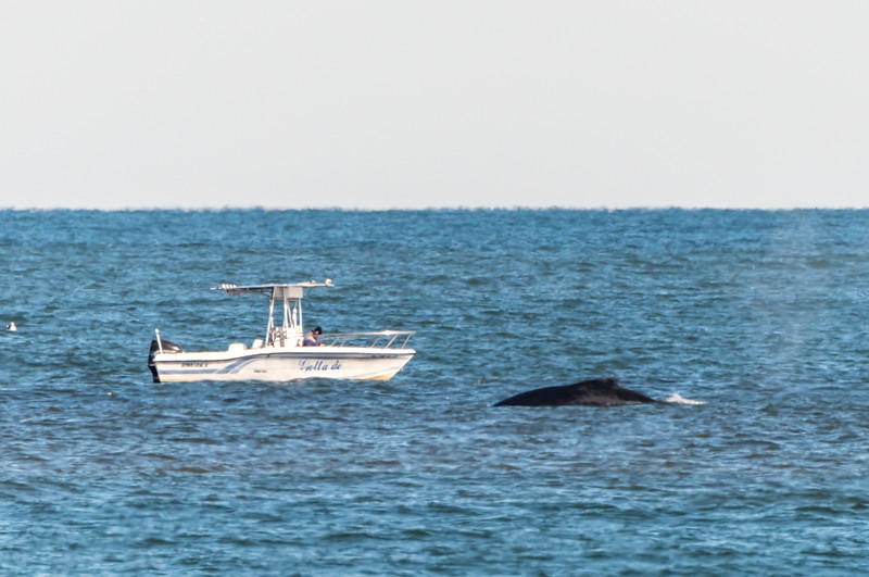 Humpback Whale at Jersey Shore 11/10/16