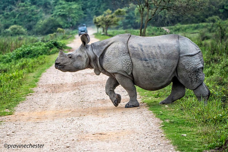 Rhino Crossing