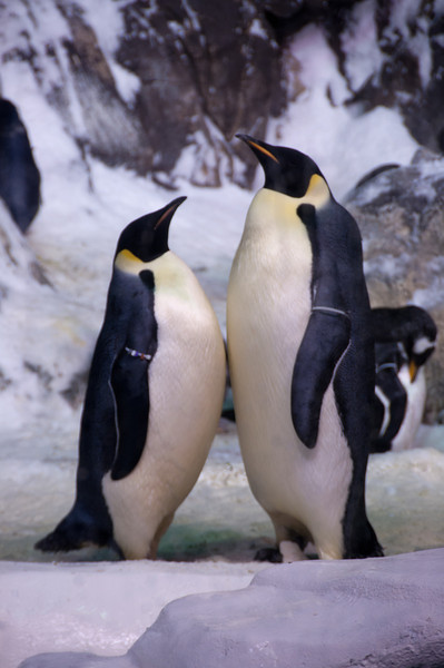 283 - Penguin Dance