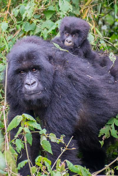 Mother and 2 month old baby, Muhoza Family, Volcanoes National Park, Rwanda