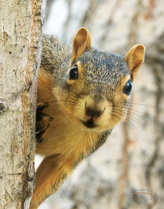 Face-time with a Squirrel