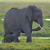 Elephant Mother and Baby, Amboseli National Park, Kenya, East Africa