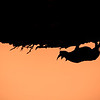 Rhinoceros silhouette at Okaukuejo Camp waterhole at sunset, Etosha National Park, Namibia, Africa