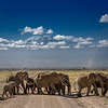 A group of African elephants crossing the road in front of Mt. Kilimanjaro at Amboseli National Park, Kenya, East Africa