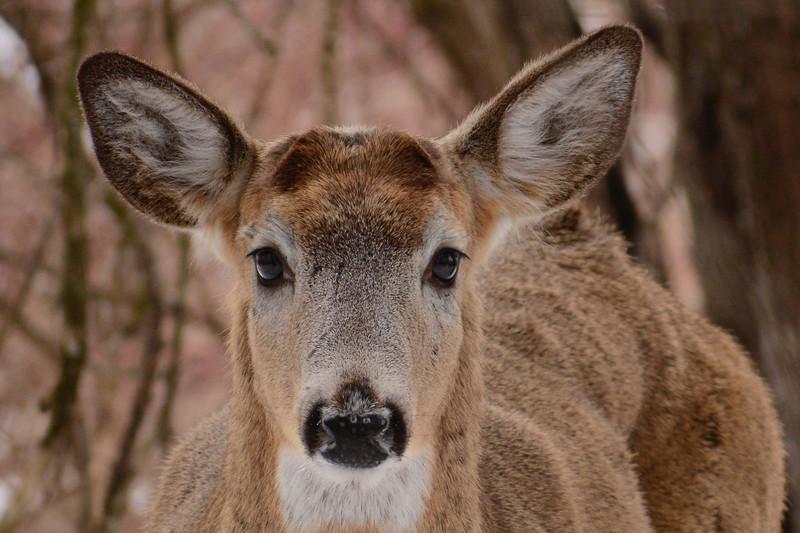 Dear, O' Deer