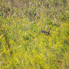 Hiding in the Field