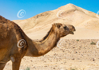 170503-729b camel12j300