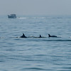 A Pod of Dolphins 7/8/16
