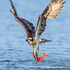 Powerful Wings
