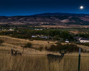 Deer by Moonlight