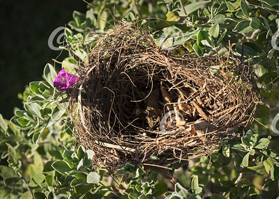 Empty Bird Nest in a Beautiful Shrub
