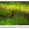 Rabbit Bethel United Methodist, Tottenville, Staten Island