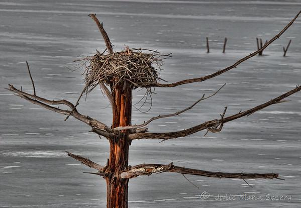 Osprey nest above a frozen lake
