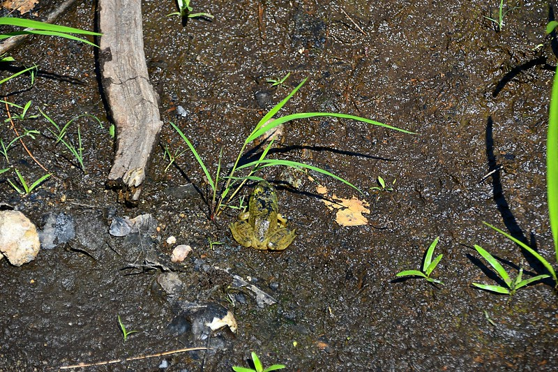 Green Frog Rescue