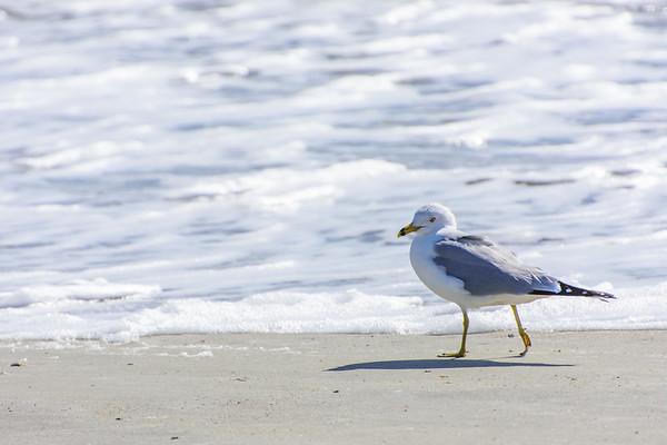 Tybee Island; GA