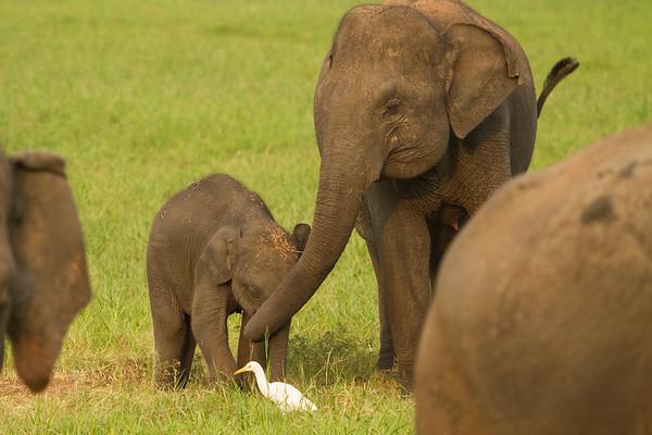 Elephant mother hug