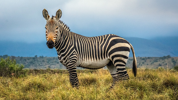 Montain Zebra National Park, Cradock