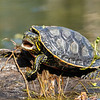 What Do Turtles Look Like on the Inside?