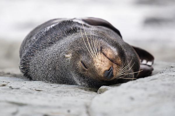 Seal's Slumber