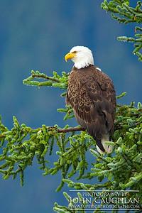 Eagle1l