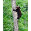 Vince Shulte Bear Trip June 2006
