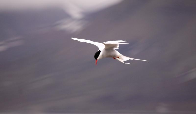 Αρχιπέλαγος Svalbard, ΑΡΚΤΙΚΟΣ ΩΚΕΑΝΟΣ