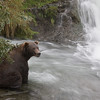 Brooks Falls | Katmai National Park | Alaska