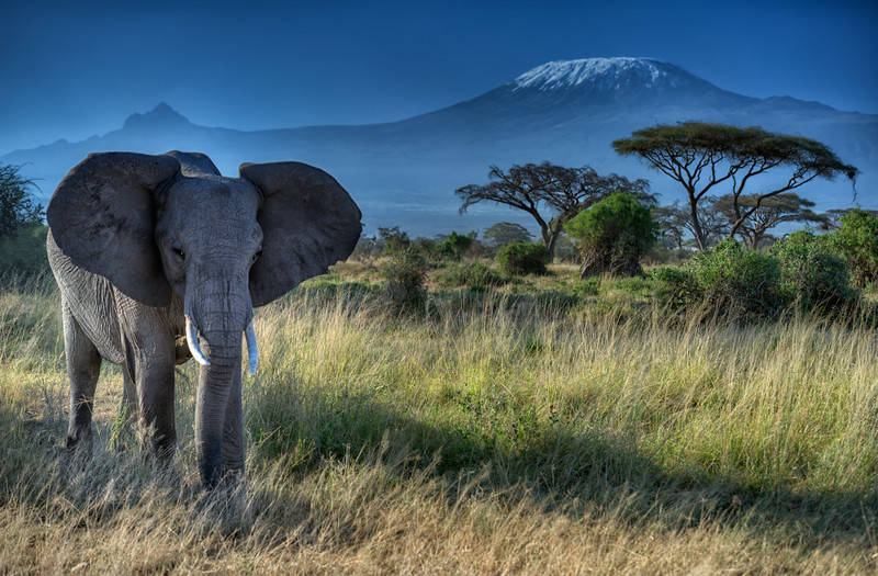 Elephant and Mt. Kilimanjaro, Amboseli National Park, Kenya, East Africa