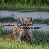 Kit Fox Brothers