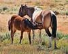 Wild Horses Will Drag Me Away