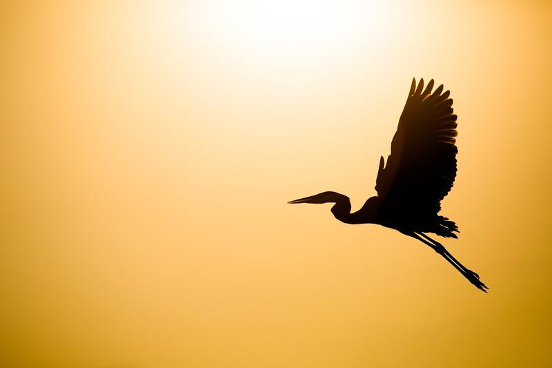 Heron Arise