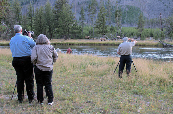 Photographers in Yellowstone.  Between you and the animals, you're likely to see men and women hauling tripods and cameras with huge lenses.  The residents -- here, elk -- are on the far side of the river.