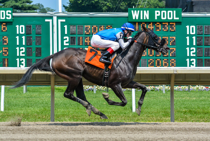 Thoroughbred Horse at Monmouth Park