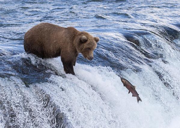Katmai National Park | Brooks River | Alaska