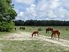Horses at Stafford Field