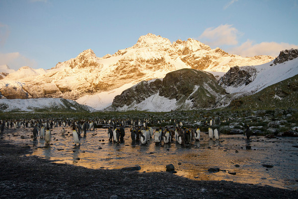 Sunrise among the king penguins