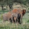 Elephant family in Tarangire National Park, Tanzania, East Africa